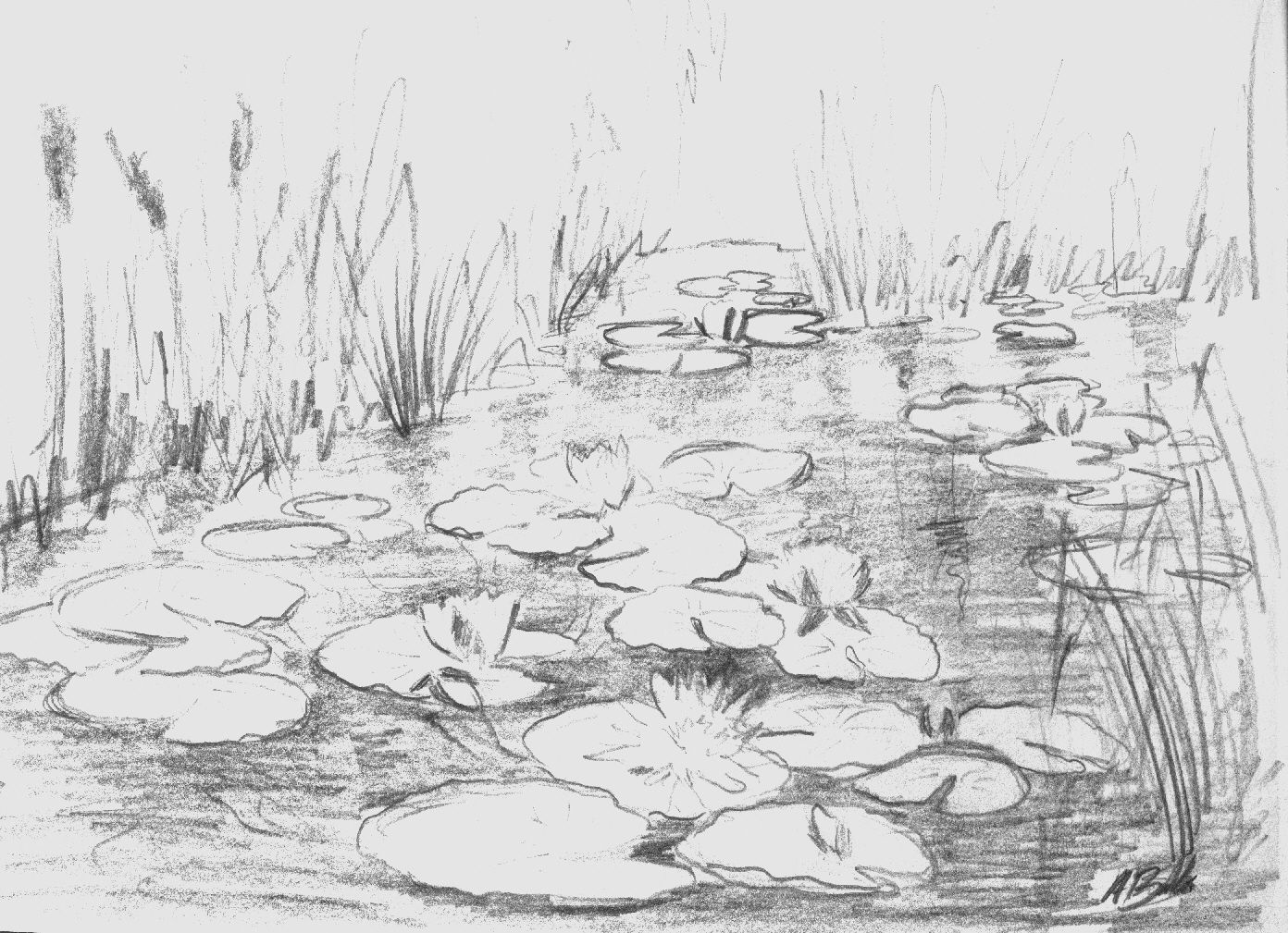Water Lily Drawing Step By Step