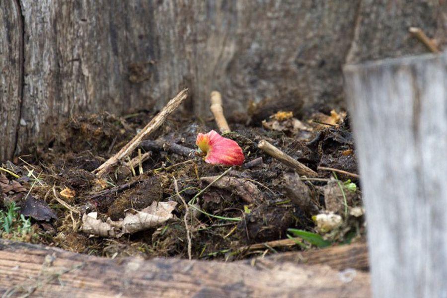 10 Dinge, die nicht auf den Kompost gehören   BIORAMA