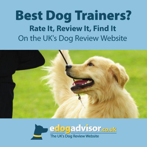 Dog Dogs Edogadvisor Reviews With Images Dog Trainer Best