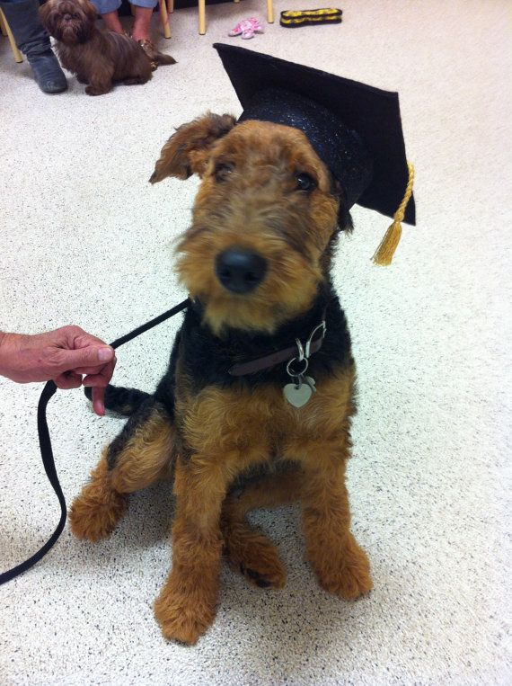 Dog Graduation Cap Graduation Hat Costume Dogs Puppies Pet