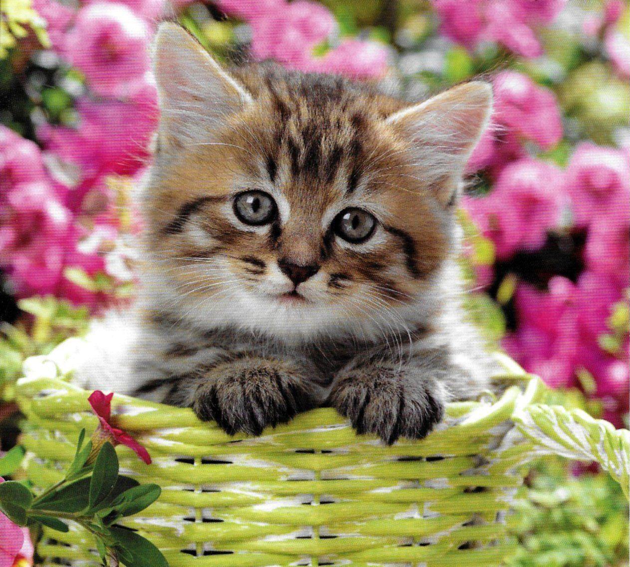 cute little fluffy tabby kitten aww �� cute fluffy