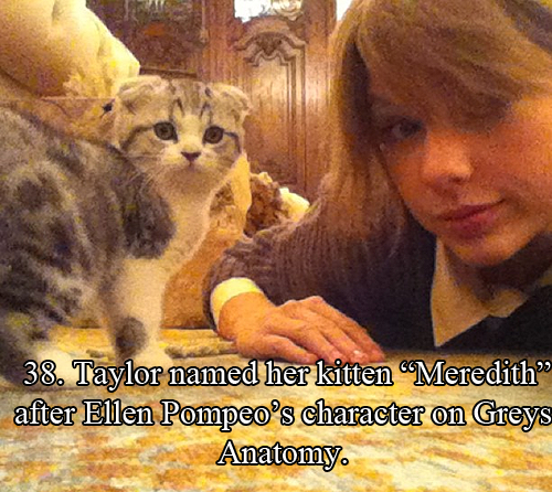 [USED] Taylor swift cat, Meredith swift, Taylor swift