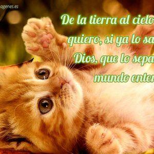 Poemas Cortos Para Enamorar Gatitos Gatos Tiernos Fotos De