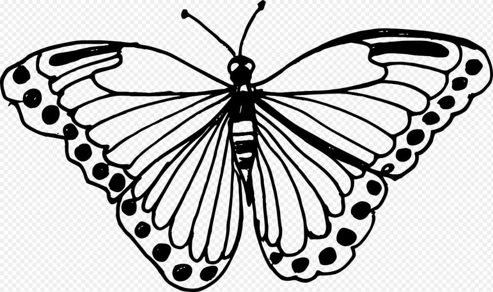 Butterfly Drawing Png 10 Butterfly Drawing Png Transparent 2430 1443 Png Download Free Tra Butterfly Drawing Butterfly Clip Art Butterfly Drawing Outline