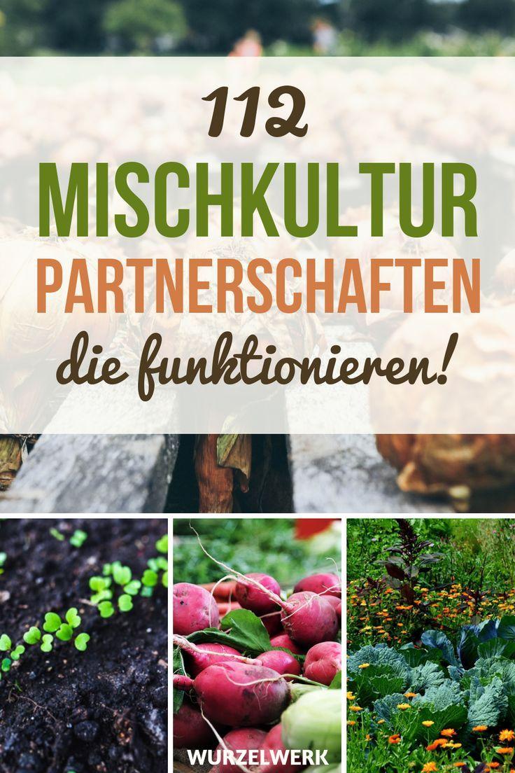 28 Gemüsearten und ihre wirksamsten Mischkultur-Partner + Beispielplan - Wurzelwerk #howtogrowvegetables