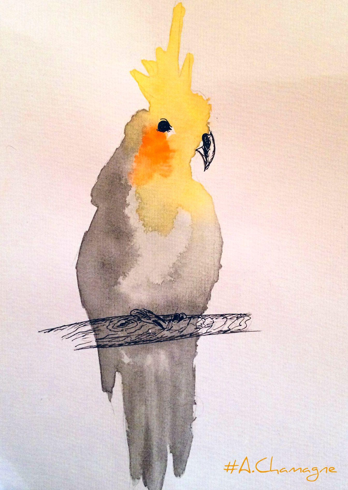 Image Oiseaux Exotiques De Zakova Lada Du Tableau Akvarelovy