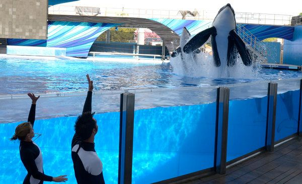 Killer Whale Shows Restricted at SeaWorld Orlando - NYTimes.com