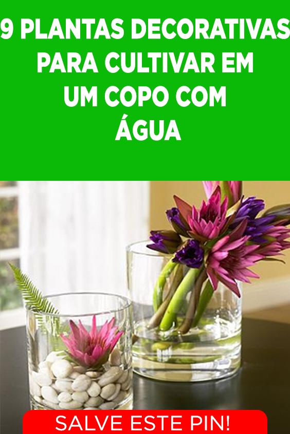 ef421bd993d 9 plantas decorativas que você pode cultivar em um copo com água #natureza  #decoracao #plantas #plantasdecoracao
