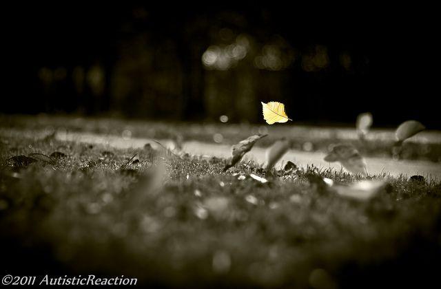 Free As The Wind Blows: | Bokeh, Blur, Gallery