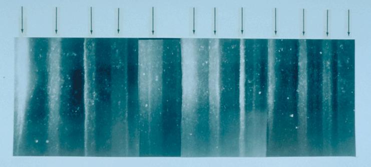 GISP2 1855m ice core layers - Carota di ghiaccio - Wikipedia