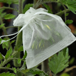 Keep seed collection true by using tulle or cheesecloth bags tied around the plant.