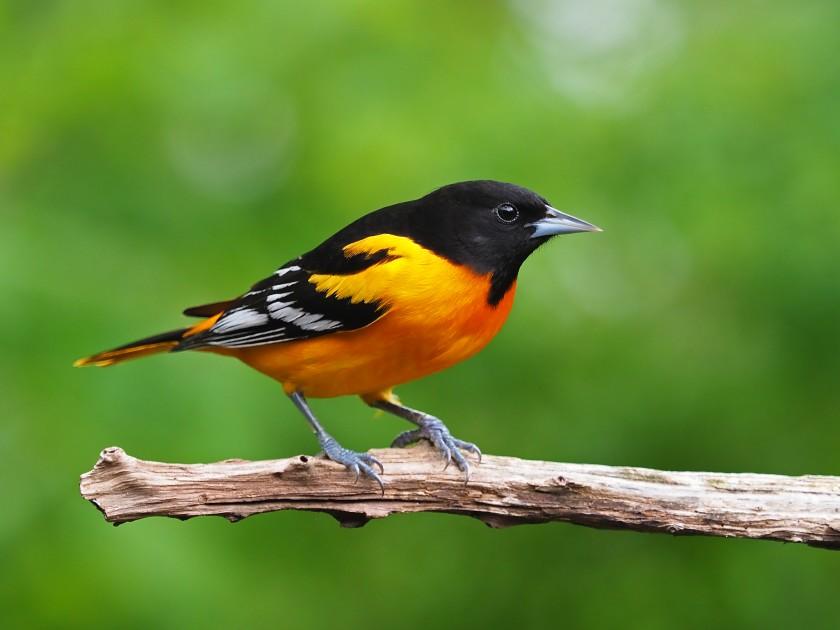 Missing Nearly 3 Billion Birds That Used To Live In North America Habitats Bird Animals