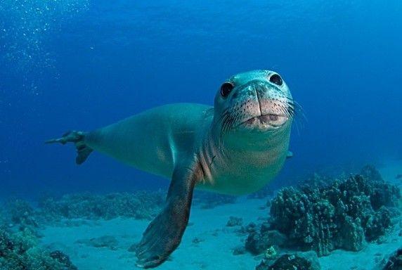 what animals went extinct in 2016 quora sea pinterest extinct