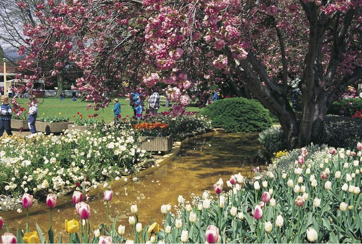 What Australia Is Like In The Spring Flowers And Gardens