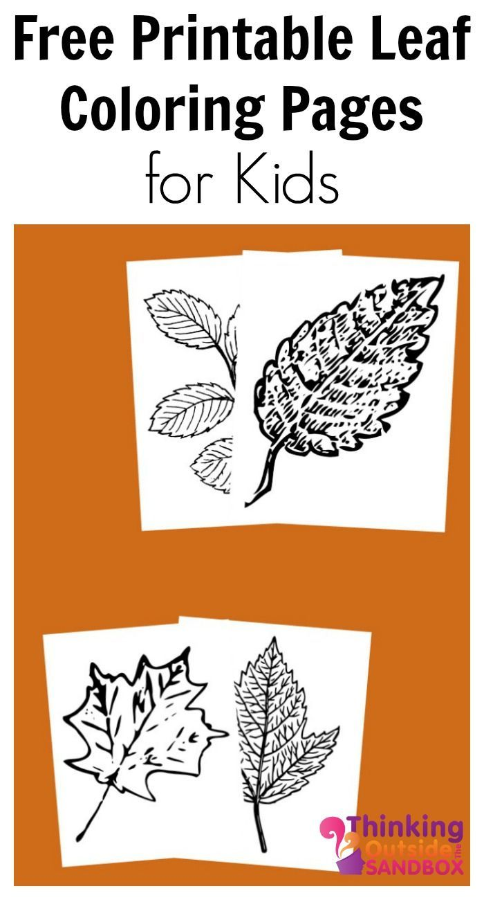 Free Printable Leaf Coloring Pages | Pinterest | Free printable ...