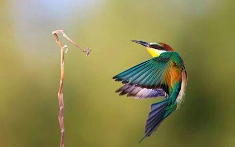 Colibrí Fauna Pinterest Birds Beautiful Birds And Bee Eater