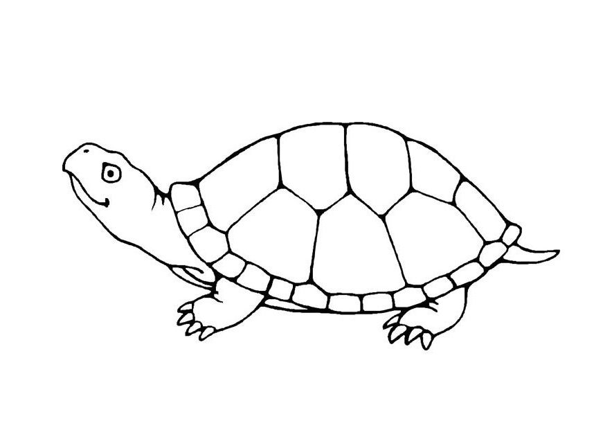 turtle outline printable Google