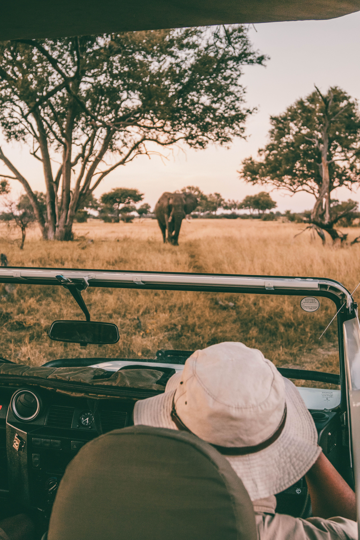 #Africa #Safari #Wildlife #Kenya #Namibia #Tanzania #Animas #Uganda #Rwanda #SouthAfrica #Botswana #Zimbabwe #Zambia