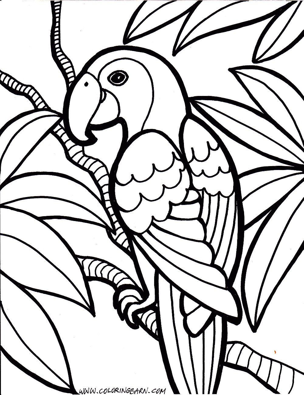 Bird Coloring Pages Bird Coloring Pages Telematik Institut Entitlementtrap Com Jungle Coloring Pages Bird Coloring Pages Animal Coloring Pages