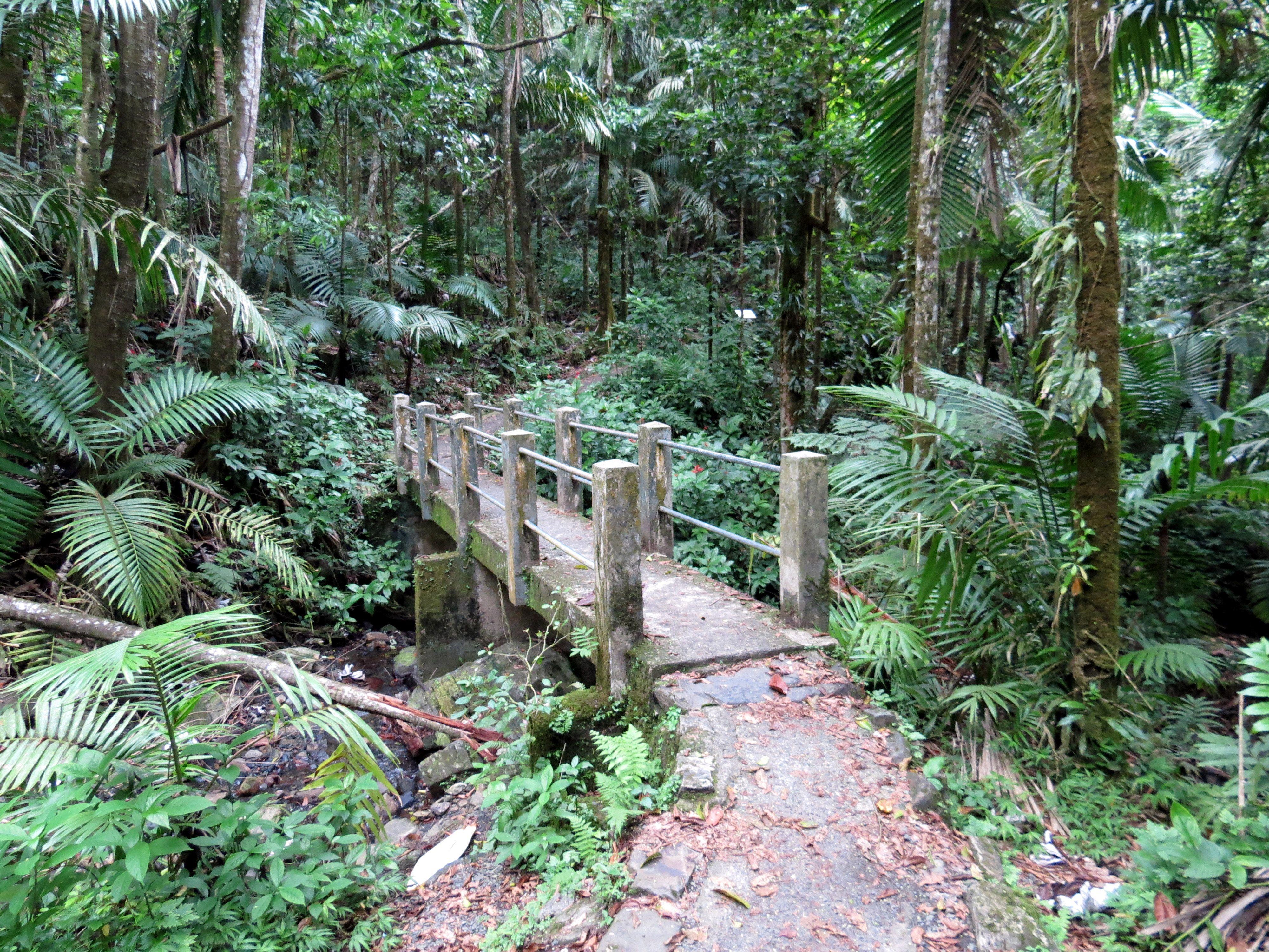 el yunque rainforest tours half day