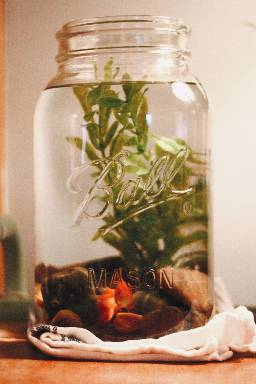 Diy mason jar fish tank with river rocks and a live plant for Fish tank planter