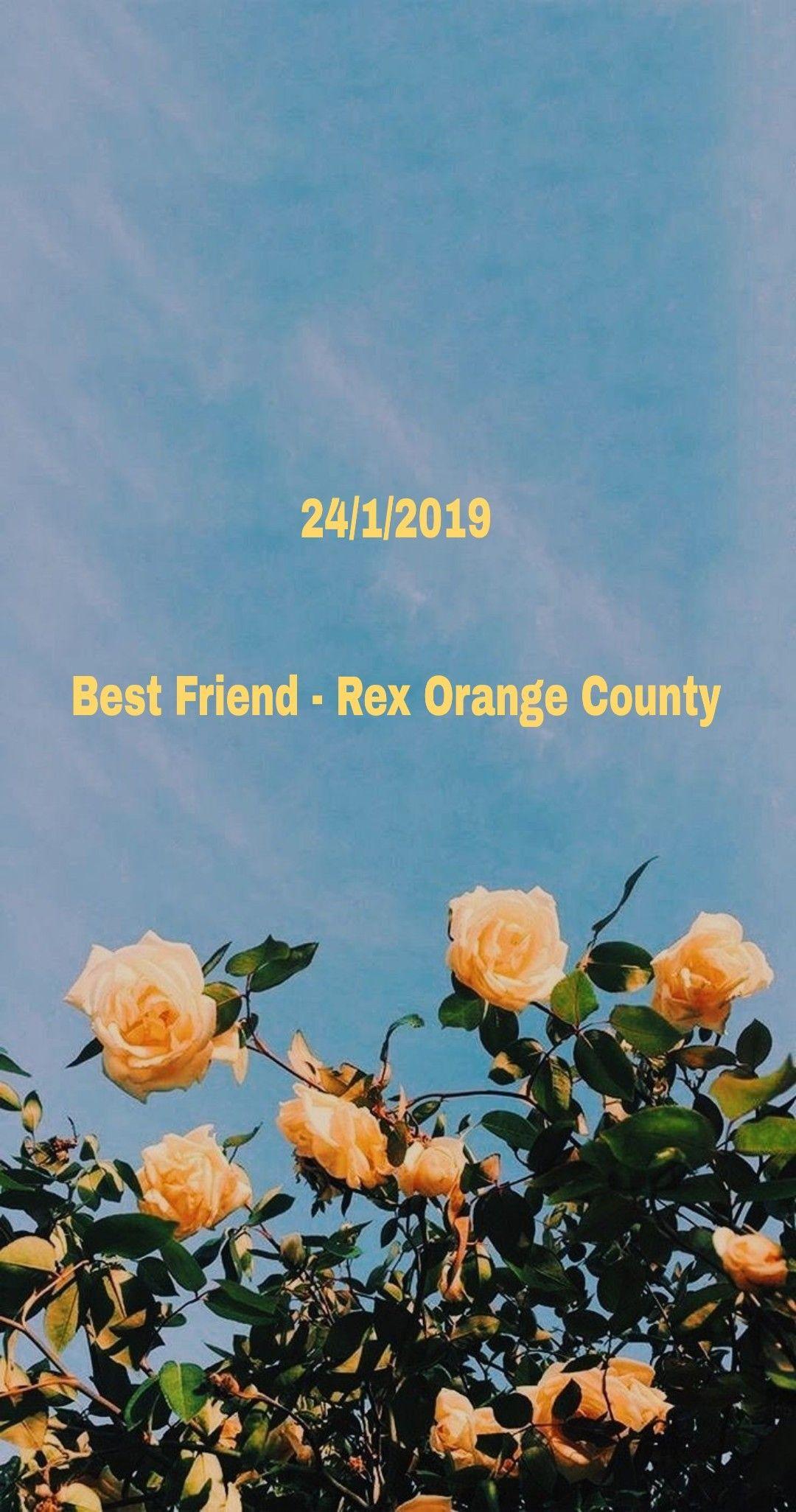 Rex Orange County Best Friend Wallpaper Shawn Mendes Lyrics Wallpaper Shawn Mendes Lyrics Rex Orange County Coolest wallpaper flower with quotes