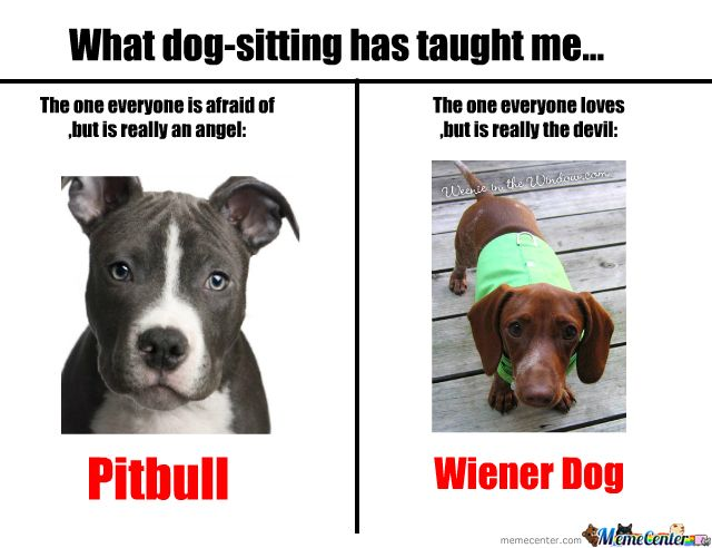 Pitbulls And Wiener Dogs Pitbulls Funny Dog Memes Wiener Dog