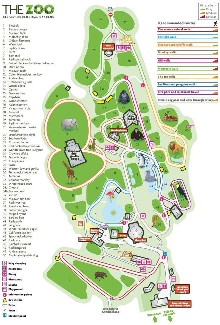 Belfast Zoo map Maps Pinterest Belfast Zoos and City