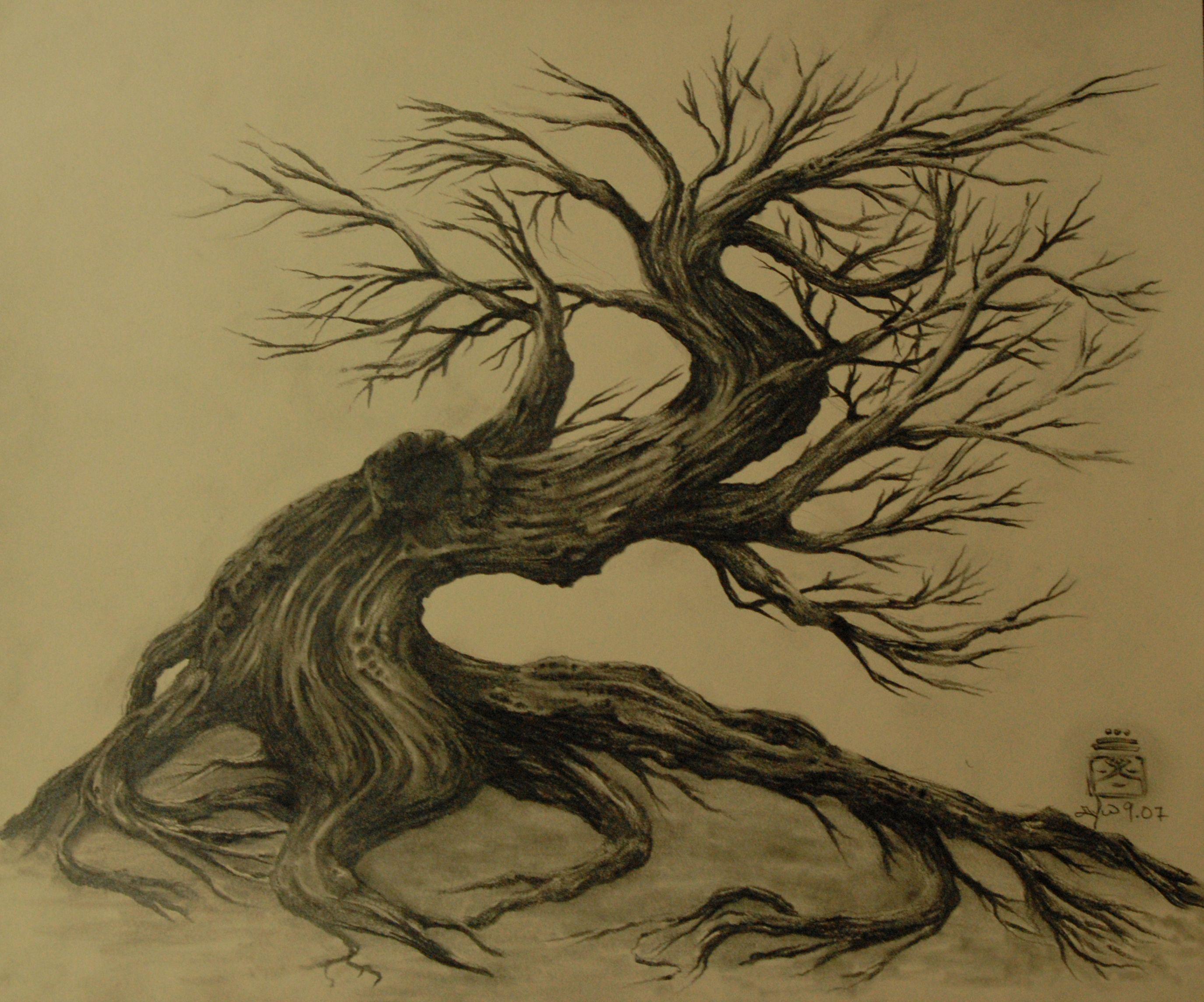 tree drawing dr odd trees pinterest tree drawings