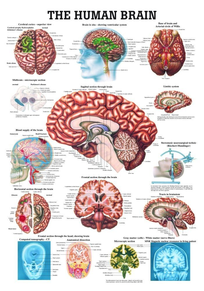 Interested In A Brain Chart This Colorful Chart Is Very Informative
