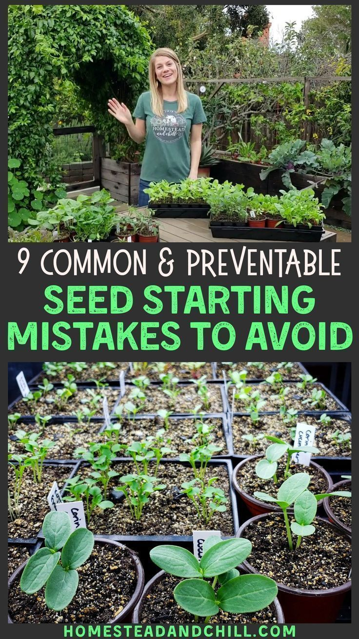 9 Common Seed Starting Mistakes To Avoid is part of Garden seeds, Plants, Garden planning, Garden, Garden projects, Growing vegetables - Not enough light  Too much water  Bad timing  Come learn how to avoid or fix the 9 most common seed starting mistakes  and grow happy, healthy seedlings!