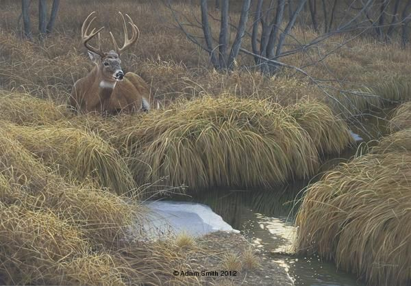 Down Time Whitetail Deer Painting By Adam Smith Art