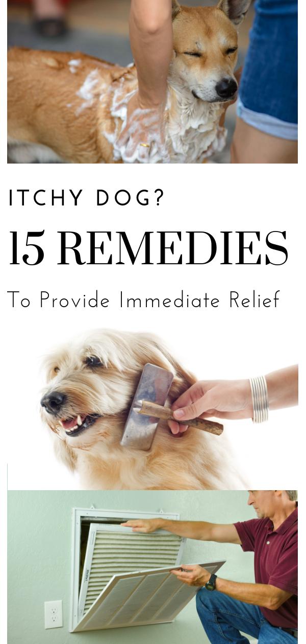 89f79c307feafac622e6ae07cbdc4745 - How Can I Get My Dog To Stop Scratching Himself