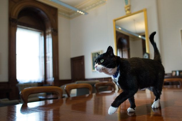 Named After The Former Prime Minister And Foreign Secretary Palmerston Was Recruited From Battersea Dogs And Cats Home He Arrived There In March After Being F