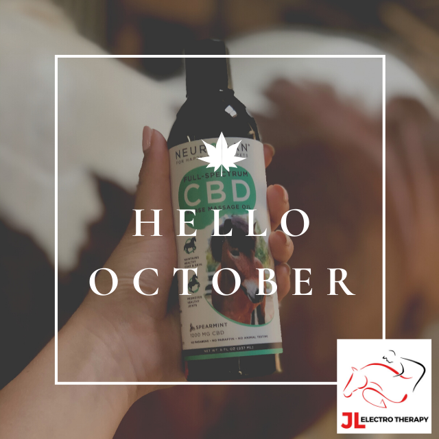 It's October? Already? Grab your pumpkin spice latte and massage your horse with CBD massage oil! #CBD #horse #equine #neurogan #equine #horsesofinstagram #equinesofinstagram #equinecare #giveaway #chicago #chicagoliving #chicagogram #illinois #onlineshopmalang #shopsmall #shoplocal #jlelectrotherapyonline #jlelectrotherapy #ordernow #october #fallvibes #cbdoil #cbdwellness #cbdproducts #welovecbd #productivity
