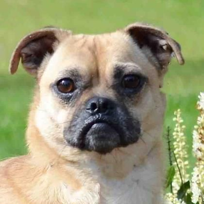 Adopt a Pet | Pets of the Week | Lollypop farm, Dogs, Pets