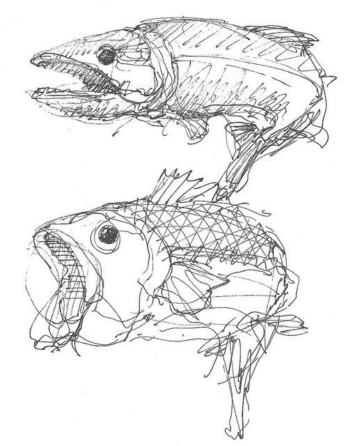 Pacific Salmon Bone Sceleton