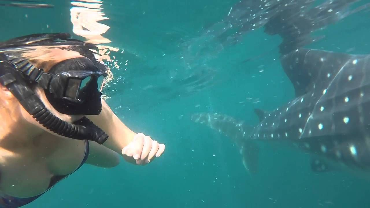 Swimming with Whale Sharks in Bay of L.A. Baja, Mexico