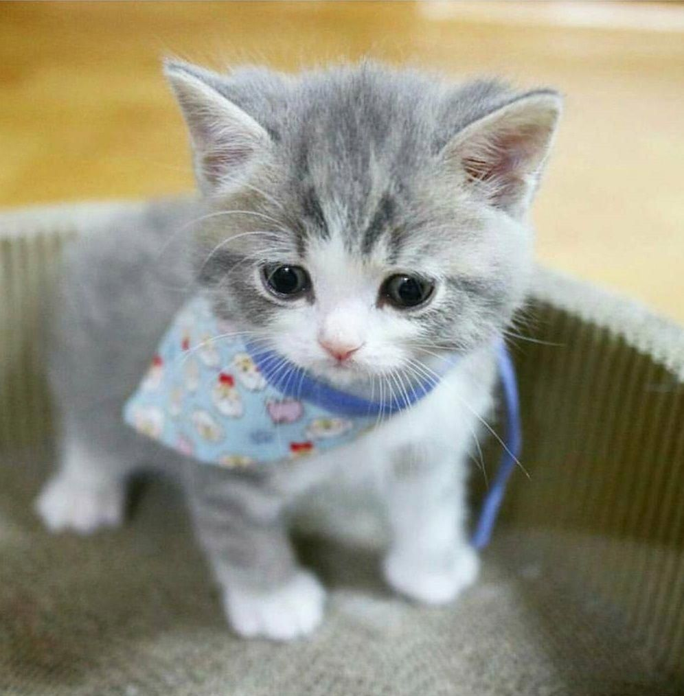 So What Do You Want For Dinner Cute Baby Animals Kittens