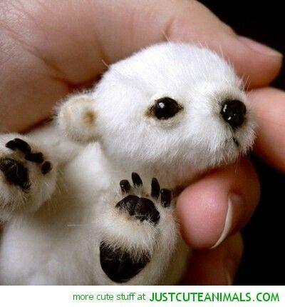 Its a baby polar bear and it is sooooo cute