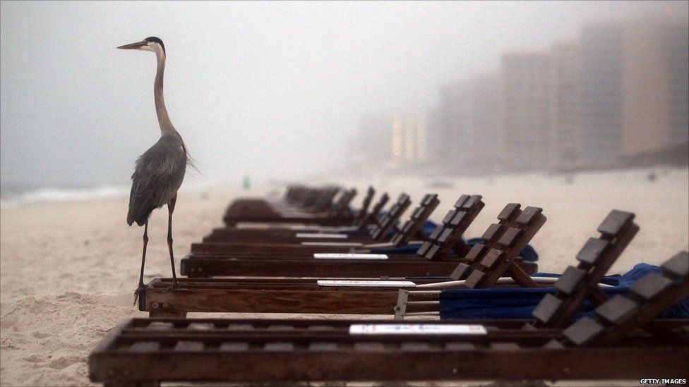 On the first anniversary of the BP oil spill, a crane stands on a beach chair at Orange Beach, Alabama.