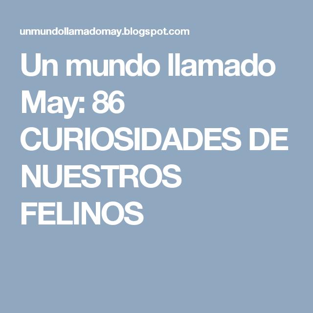 Un mundo llamado May: 86 CURIOSIDADES DE NUESTROS FELINOS