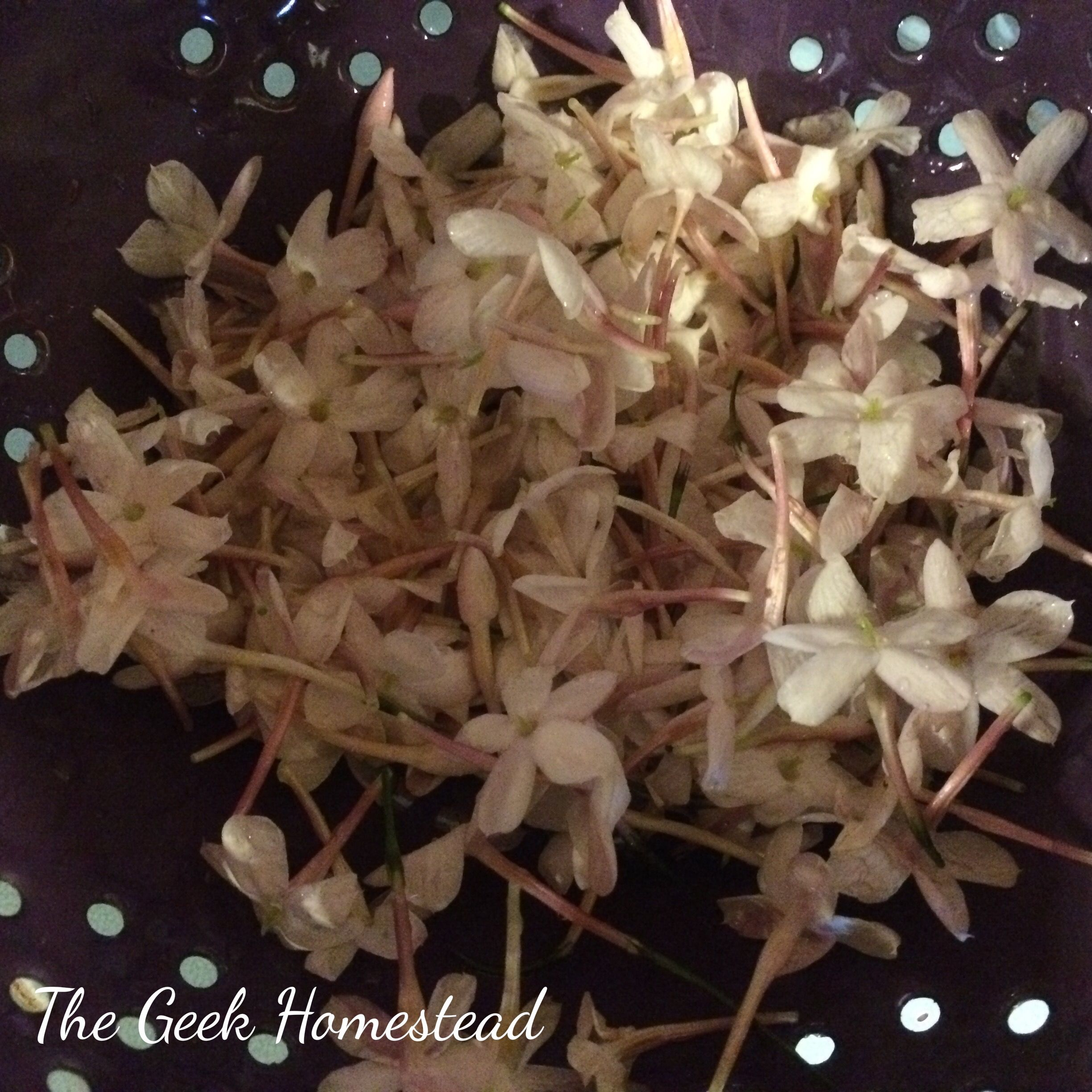 We have a small jasmine plant that I planted last year. Jasmine love the weather in San Diego County, and best of all they do not need much water to grow. Right now my jasmine is bloomi…