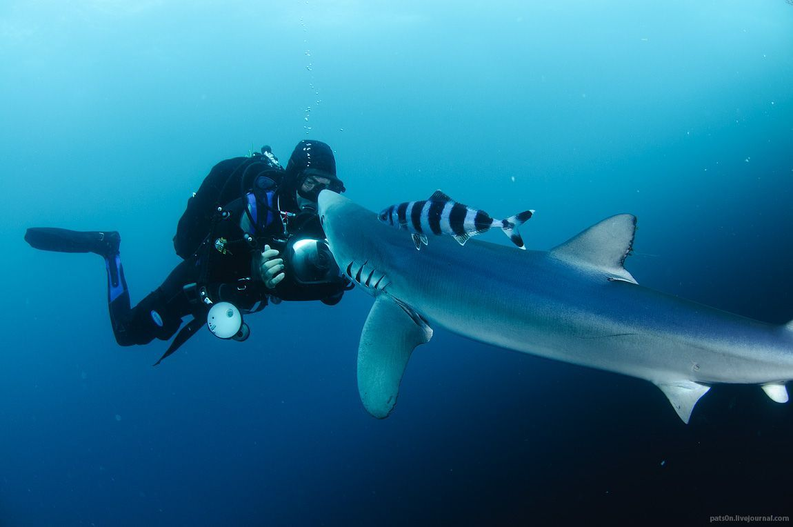 The Most Spectacular Underwater Photography of All Time | The Stuff Makes Me Happy