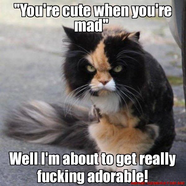 89fac779cb3912603582c50bf00e09a6 you are cute when you're mad memes pinterest meme, memes,Food Cat Meme