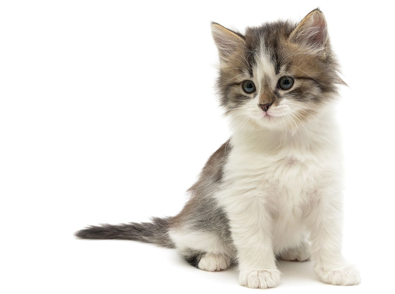 How To Introduce A Kitten To An Older Cat Thecatsite Cats Introducing A New Cat Older Cats