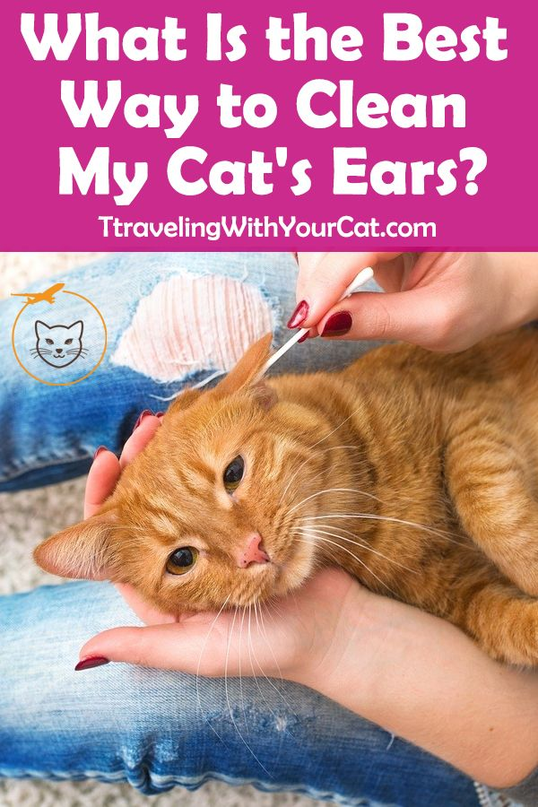 How to clean cats ears? With a few simple tools and