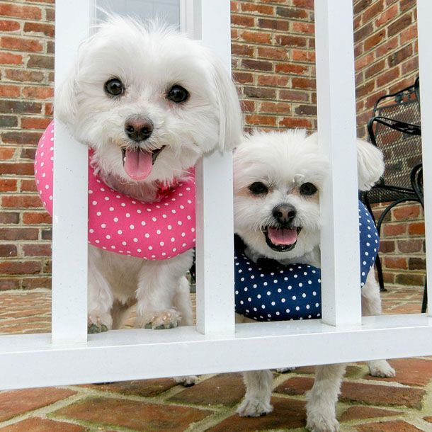 Puppy Bumpers For Your Dog S Safety Puppy Proofing Dog Proof