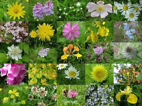Scottish Wildflowers Wildflower Garden Unique Flowers Flower Pots