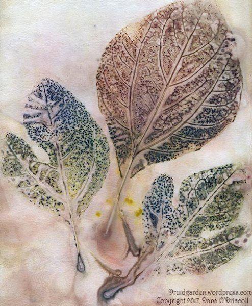 Sacred Tree Profile Sassafras Medicine Magic Mythology And